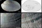 shell-engraving6